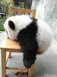 Bear On The Chair 442 Best Panda Love Images On Pinterest Panda Bears Panda Panda