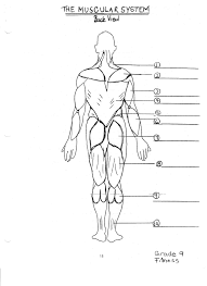 Body Anatomy Back Human Anatomy Chart Page 176 Of 202 Pictures Of Human Anatomy Body