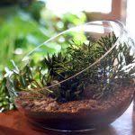 terrarium plants be equipped large terrarium containers be