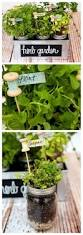 270 best u0027erbs images on pinterest indoor herbs herb gardening