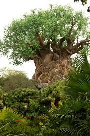 25 best mickey u0027s backyard bbq fort wilderness resort and
