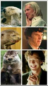 Cumberbatch Otter Meme - 18 best otters who look like benedict cumberbatch images on