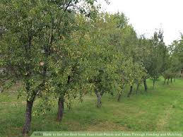 how to get the best from your fruit plants and trees through