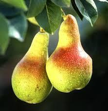 selecting fruit trees for your garden uc master gardener program