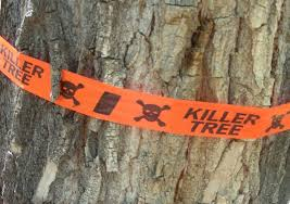 what does killer tree arboristsite com