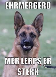 Funny German Shepherd Memes - funny german shepherd memes 28 images 25 b 228 sta funny german