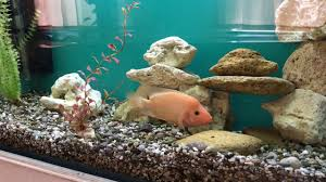 Decorations At Home by Fish Tank Decoration At Home Idea Youtube