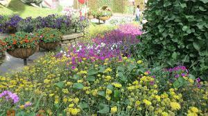 dubai miracle garden absurdity in the desert rachel u0027s ruminations