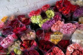 Colorful Roses Cut Flower Industry In South America Photos And Images Getty Images