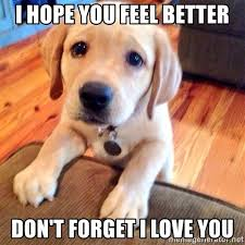 Feel Better Meme - feel better puppy pics pets wallpapers