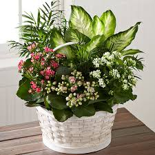 funeral plants the ftd rural beauty dishgarden