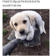 Shovel Meme - shovel pupper meme by ohiohunter14 memedroid