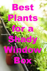 best plants for a shady window box window plants and box