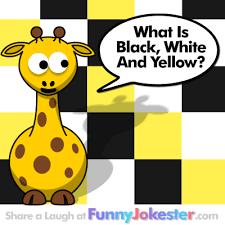 funny colors new colors joke yellow white black colors joke