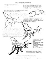 drawn bees beginner pencil and in color drawn bees beginner