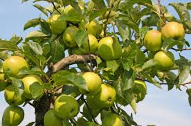 top 5 apple trees sold through the arbor day tree nursery arbor