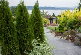 native plants for hedging privacy please choosing the best plants to hide a view