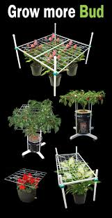 grow room lighting requirements plant training techniques can substantially improve yield while