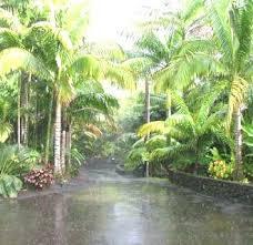 Tropical Gardening Ideas 30 The Best Of Tropical Garden Ideas Scheme