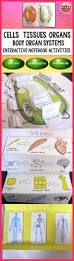 Anatomy And Physiology Coloring Workbook Cells And Tissues Answers Top 25 Best Plant Cell Physiology Ideas On Pinterest Plant Cell