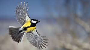 desktop hd download wallpaper of birds