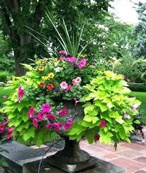 Planter Gardening Ideas Garden Container Ideas Garden Container Ideas Concrete Birdbath