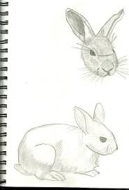 bunny face and side sketch by shadowhaseo on deviantart