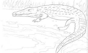 alligator coloring pages crocodile coloring pages coloringsuite com