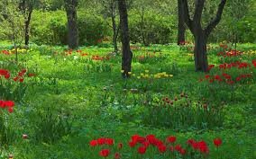 most popular flowers most popular cartoon forest flowers free 918671 hd wallpaper