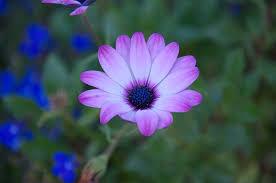 Purple And Blue Flowers Free Photo Autumn Purple Blue Blossom Free Image On Pixabay