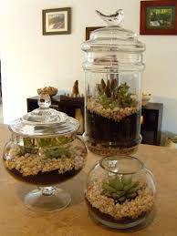 succulents in vintage apothecary jars by sadie seasongoods www