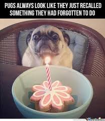 Pug Birthday Meme - pugs by lekenny meme center
