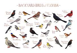 Florida birds images Florida backyard birds field guide art print watercolor jpg