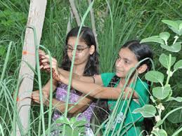 111 Lecciones Que La Vida The Villagers Of Piplantri Plant 111 Trees Every A Child