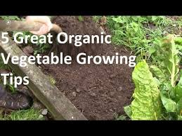 5 of the best organic vegetable growing tips youtube