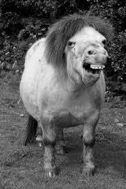 My Little Pony Meme Generator - ugly my little pony meme generator