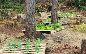 up cycled wood pallet garden pallets designs