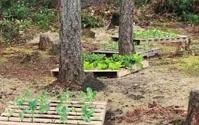 Wood Pallet Garden Ideas Up Cycled Wood Pallet Garden Pallets Designs