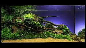 Aquarium Decoration Ideas Freshwater The Art Of Aquarium Decoration Youtube