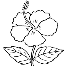 fancy plush design hibiscus coloring pages 5 hibiscus flower