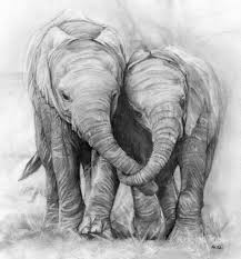 pencil drawings elephants pencil drawing a photo on