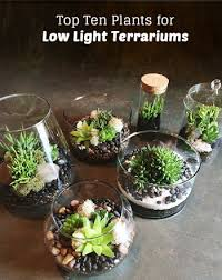top ten low light terrarium plants pistils nursery