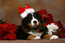 christmas dog wallpaper learntoride co