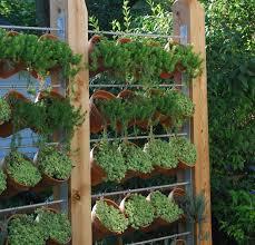Privacy Garden Ideas Need Privacy Diy Garden Privacy Ideas The Garden Glove