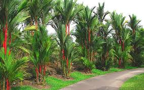 hortica plants palm tree landscaping company in dubai