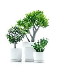 decorative indoor plants planters interior plants planters decorative indoor hanging plant