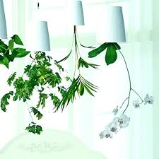 decorative indoor plants indoor decorative plant pots big indoor plant pots plant stand cool