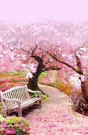 best 25 cherry blossoms ideas on cherry blossom