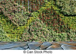 pictures of flower and plant wall vertical garden csp19017087
