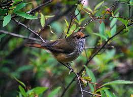 australian native plant identification birds identification of australian birds sydney and blue